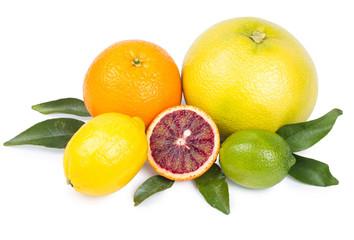 Isolated citrus fruits. Grapefruit, orange, lemon and lime isolated on white