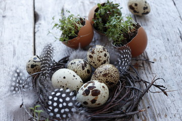 Still life of quail eggs and watercress seedlings. Selective focus.