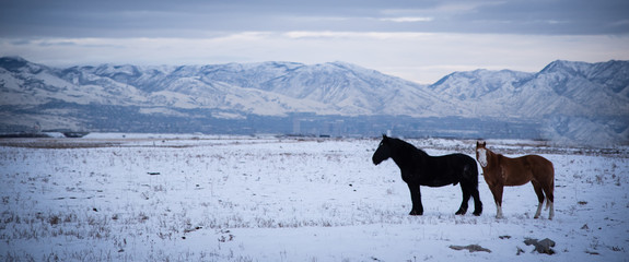Closeup view of a horse in a snowy mountain landscape