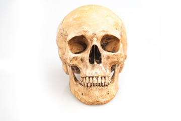 real human skull isolated on white background