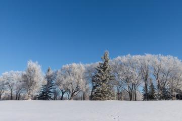 frosty tree landscape