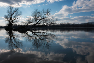Artistic photo of bare trees reflecting on a river's water surface with a nice cloudscape