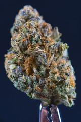 Macro detail of cannabis bud (forum cut cookies marijuana strain) isolated over black
