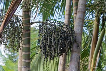 Acai fruit energy from Amazon