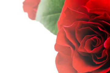 Rose colored sweet romantic love.