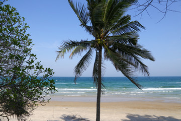 Thailand sea with coconut trees, beautiful.