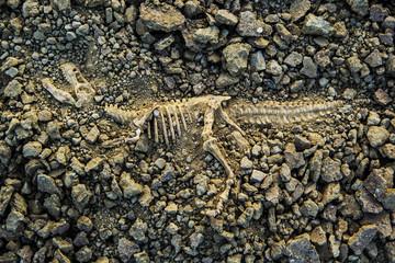 Dig bones fossils T-rex dinosaur
