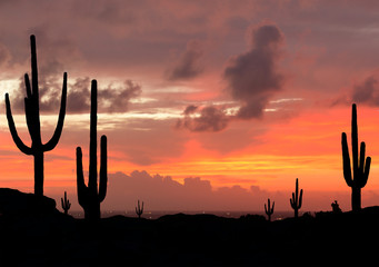 Sunset in the Desert with Silhouette of Saguaro Cactus with city in background