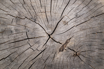 Texture of wooden tree stump, crack wood ancient