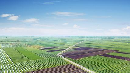 Beautiful scenery of red onion farmland Wall mural