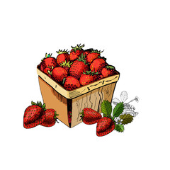 Hand drawn colored sketch with basket of strawberries isolated on white background.