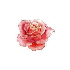 watercolor drawing rose