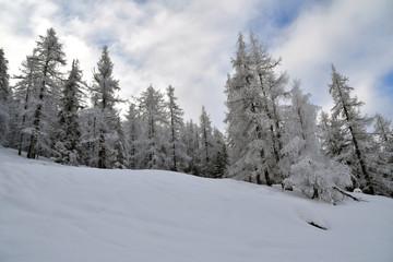 Bellissimi alberi ricoperti di soffice neve