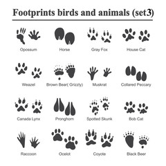 Wildlife animals and birds footprint, animal paw prints vector set. Footprints of variety of animals, illustration of black silhouette footprints.