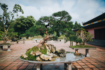 bonsai tree and decorative pond in Hue, Vietnam