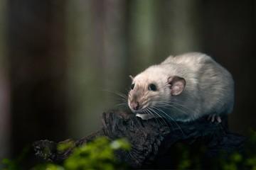 Süßes Nagetier sitzt auf einem Baumstamm.