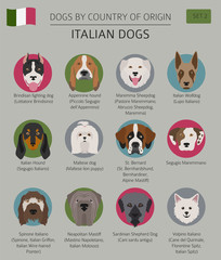 Dogs by country of origin. Italian dog breeds. Infographic template