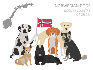 Dogs by country of origin. Norwegian dog breeds. Infographic template
