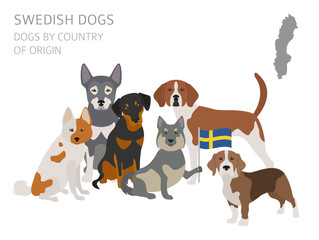 Dogs by country of origin. Swedish dog breeds. Infographic template