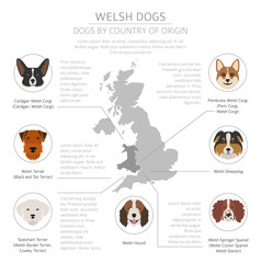 Dogs by country of origin. Walsh dog breeds. Infographic template. Vector illustration