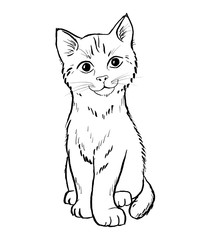 Young cat animal hand draw illustration
