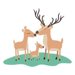 cartoon deer couple and calf over grass in colorful silhouette on white background vector illustration