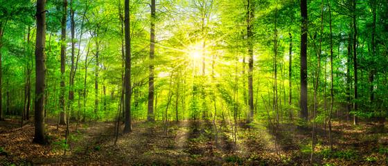 Fototapeta Grünes Waldpanorama im Sonnenlicht
