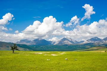 Beautiful scenery between the lake Hovsgol and the mountains of Eastern Sayan ridge, Mongolia
