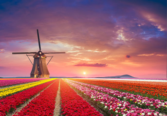Poster de jardin Corail traditional Netherlands Holland dutch scenery with one typical windmill and tulips, Netherlands countryside