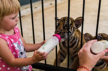 little girl is friends with a tiger