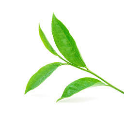Green tea leaf with drops of water on white background
