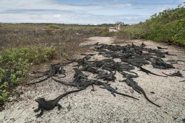 isole galapagos-ecuador