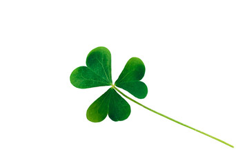 St. Patrick's Day symbol. Lucky shamrock, isolated