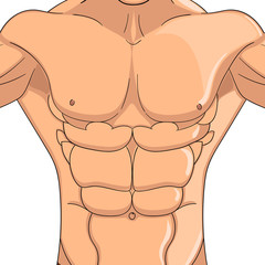 Bodybuilder, anatomy of the abdominal muscles man. Vector object on a white background