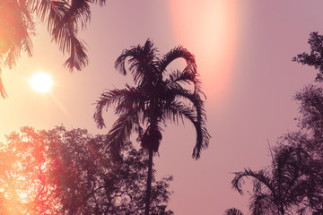 Palm trees silhouette against sunset. Filter toned effect, purple and orange colors. Horizontal