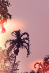 Palm trees silhouette against sunset. Filter toned effect, purple and orange colors. Copy space, vertical