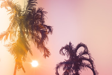 Palm trees silhouette against sunset. Filter toned effect, purple and orange colors. Copy space