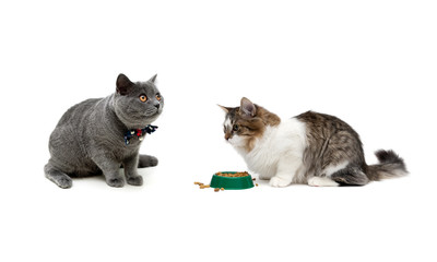 cats isolated on white background