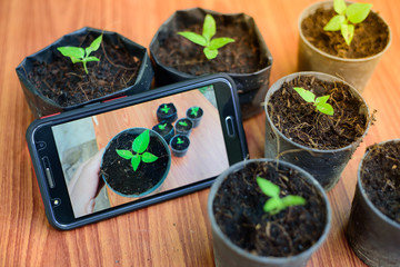 Shooting little plants  with smartphone