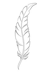 Feather sketch for coloring on white background.