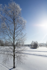 Wintry wallpaper scenery in Finland. Snowy ground and frosty forest. Sunny day with snow. Cold temperature.
