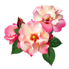 The Queen of passion, the delicate bouquet of luxurious roses as a watercolor illustration