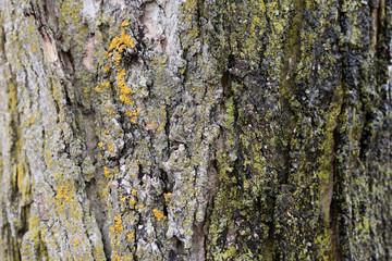 Grey tree bark - high resolution background texture