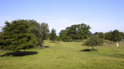 UK, Gloucestershire, mature trees in the park like landscape of Minchinhampton Common in The Cotswolds