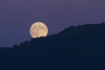 Luna llena sobre el bosque de noche / fullmoon at night