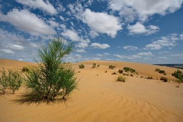 West Kazakhstan. Life in sand dunes Senek.