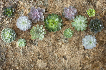 Succulents on an eco-environmentally friendly background