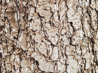 Bark of Elm. Seamless Tileable Texture. Old wood skin. Natural background