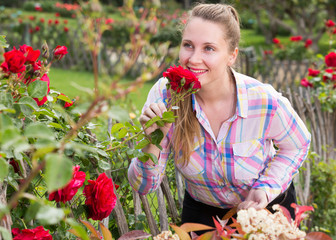 young woman with long curly hair smells roses flower outdoor