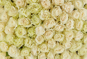floral background. roses background